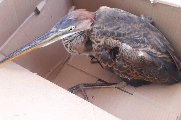 بهله سارگپه مصدوم به محیط زیست گرگان تحویل داده شد