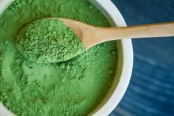 جلبک «اسپیرولینا» در کشور تولید شد/ کاربرد در ۴حوزه صنعتی
