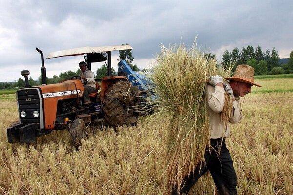 ۹ هزار و ۴۹۵ تن گندم از کشاورزان خراسانجنوبی خریداری شد