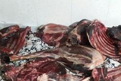 کشف لاشه قوچ وحشی در منطقه خنار آرادان/ ۲ نفر دستگیر شدند