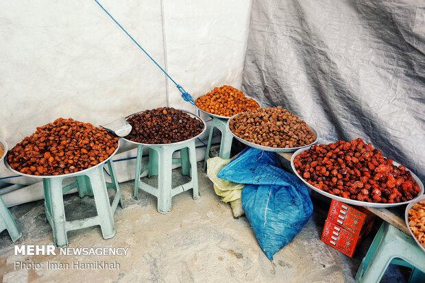 برداشت و استحصال آلو در روستای ملحمدره شهرستان اسدآباد