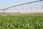 اجرای طرح توسعه سامانههای نوین آبیاری در ۲.۴ میلیون از اراضی