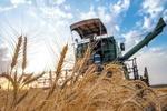 سناریوی وارداتچیها کلید خورد/ دولت در سال رونق تولید، گندم وارد میکند