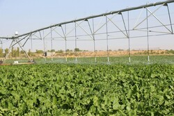 یک طرح آبیاری نوین در شهرستان بویین زهرا افتتاح شد