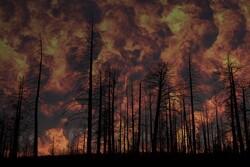 تولید ژل ویژه برای جلوگیری از آتش سوزی جنگل ها