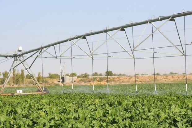 اجرای ۳ طرح برای توسعه اراضی آبی در ایلام/کشت کلزا افزایش می یابد