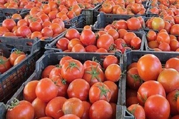 Iran exporting tomatoes to Pakistan at price of over $1 per kilo