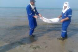 ورود مواد نفتی به دریا کنترل شد/ پاکسازی مواد نفتی در ساحل گناوه