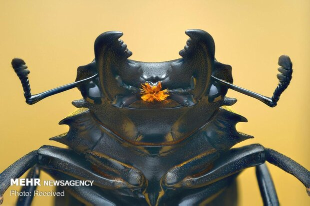 عکاسی ماکرو از حشرات