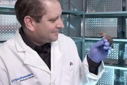 دانشمندان مغز فنچ ها را دستکاری کردند