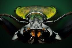 """صور حشرات بتقنية """"المايكرو"""" /صور"""