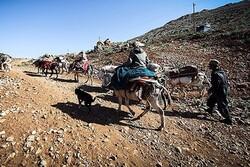 ۲۵۰۰ کیلومتر ایل راه عشایر در استان قزوین شناسایی شده است