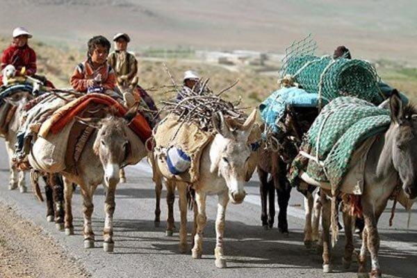۱۱۰میلیاردریال برای اجرای پروژه های عمرانی عشایر استان تخصیص یافت
