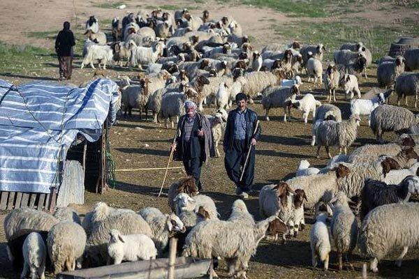 عشایر استان بوشهر سالانه ۸۰ هزار تن محصول تولید میکنند