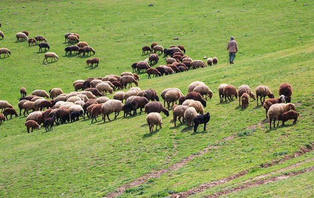 Have Iran's rangelands been shrinking over past decades?