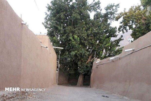 رد پای اعتیاد در «محله عمارت» میامی/ پیکر نیمهجان احیا شود