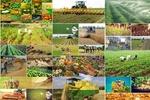 بلاتکلیفی به درازای ۴ دهه/ کشاورزان «بهکده رضوی» در انتظار مجلس