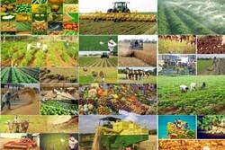 رونق کشاورزی با حضور در آنسوی مرزها/ رایزنیهای سیاسی اقتصادی کافی نیست