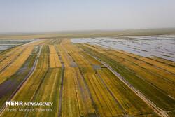 ۱۰۰۰ میلیارد تومان خسارت به کشاورزان سه استان سیلزده وارد شد