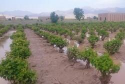 کشاورزان سیلزده لرستان ۲۶ میلیارد تسهیلات گرفتند