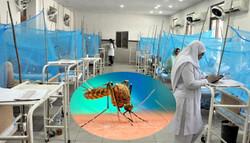 پاکستان میں ڈینگی کے مرض میں مبتلا 250 بیمار ہلاک/ ڈینگی کے مریضوں کی تعداد 50 ہزار