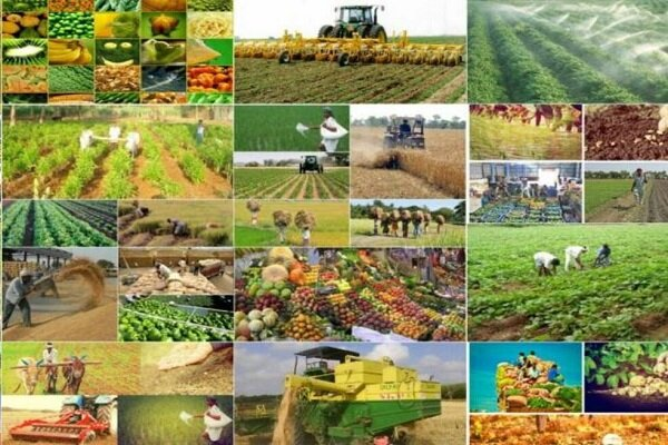 رونق کشاورزی باحضور درآنسوی مرزها/رایزنی سیاسی اقتصادی کافی نیست