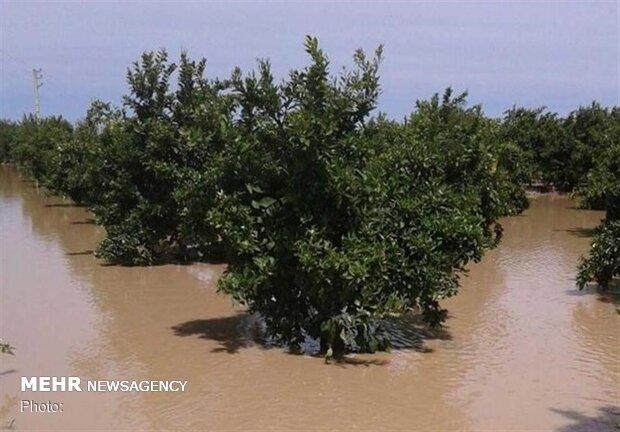 سیل ۴۶۶۲ میلیارد تومان به حوزه کشاورزی خوزستان آسیب زد