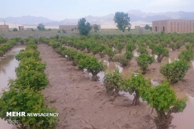 تشکیل بیش از ۲۰۰۰ پرونده خسارت سیل در بخش کشاورزی بروجرد