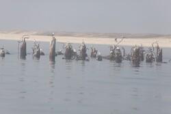 بررسی میدانی آثار لکههای نفتی در شمال جزیره خارگ انجام شد