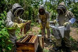 التیام زخم جنگ داخلی با عسل