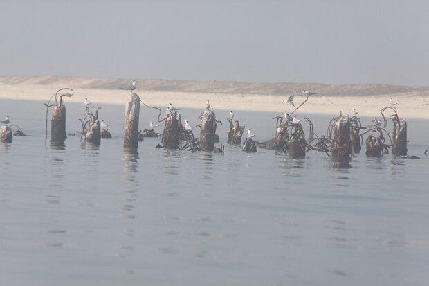 طرح آماربرداری پرندگان زمستانگذران در استان بوشهر آغاز شد