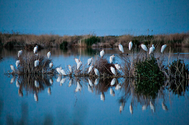 Mighan wetland hosts migratory birds once again