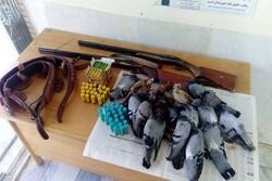 یک باند قاچاق پرنده درخراسان رضوی منهدم شد