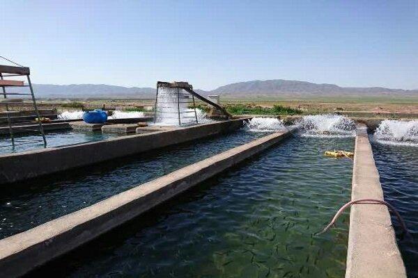 رتبه ششم تربت حیدریه در تولید انواع ماهی در خراسان رضوی