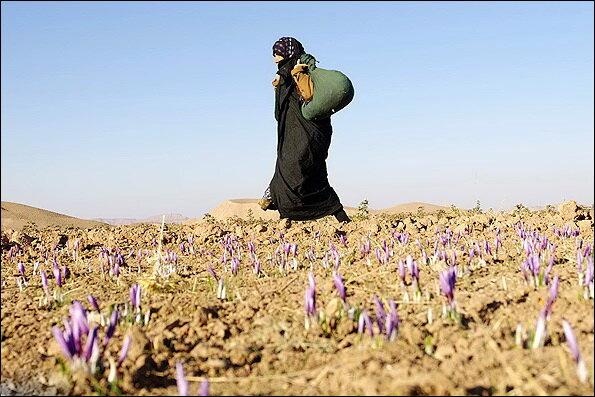 Expert delineates factors driving rural population decline in Iran