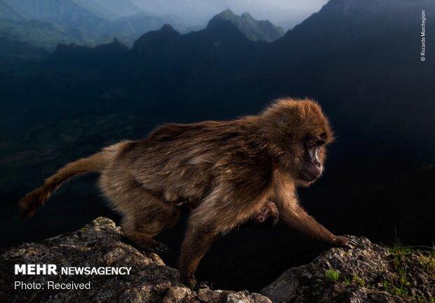 برندگان مسابقه عکاسی حیات وحش سال