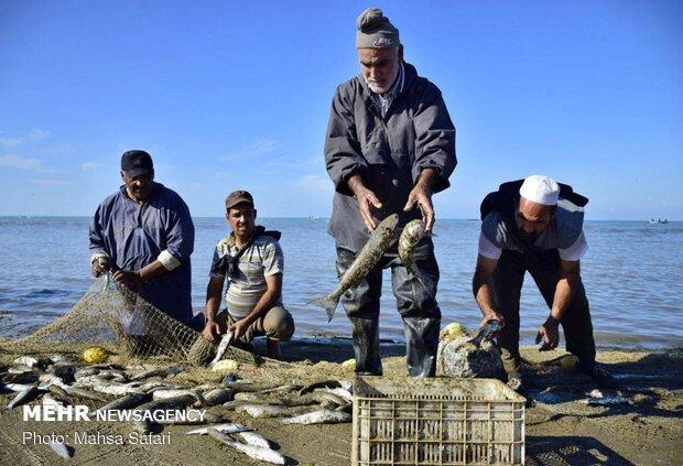 آغاز فصل صید ماهی در خزر