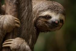 روز «تنبل»ترین موجودات روی زمین مبارک!