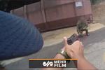 فیلمی هولناک از تیراندازی پلیس امریکا به مرد چاقو بهدست