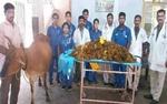 بھارتی ڈاکٹروں نے گائے کے پیٹ سے 52 کلو پلاسٹک نکال لی