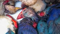 عدم توقف نسلکشی پرندگان در جنوب/ برخورد با تخلفات صید نمادین است