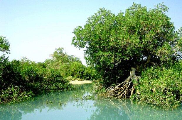 لزوم حفظ تنوع زیستی بوشهر/ معادن خارج از مناطق حفاظتشده باشند