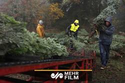 ماجرای قطع درختان جنگلی که پس از ۱۴ سال ثبت جهانی شد!