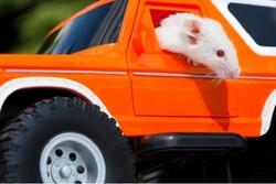 موش ها رانندگی یاد گرفتند