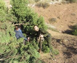شکارچیان متخلف در کمین محیط بانان خلخال گرفتار شدند