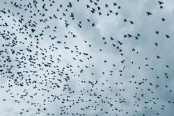 ہمدان کے آسمان پر خوبصورت مہمانوں کی پرواز