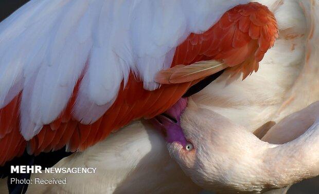 نبذة من صور عالم الحيوان
