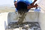 رتبه دهم ایران در تولید میگو در جهان / پیش بینی تولید ٦٠ هزارتنی در پایان برنامه ششم
