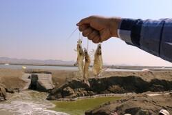 """حصاد الروبيان في مدينة """"جاسك"""" جنوبي ايران / صور"""