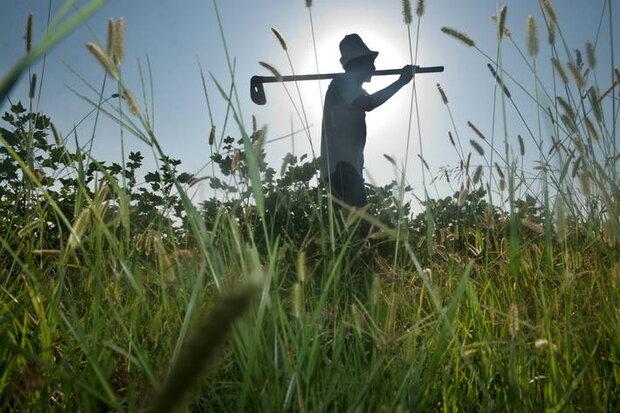 رودان در بخش کشاورزی ۴۵هزار تن ظرفیت صنایع تبدیلی و ترکیبی دارد